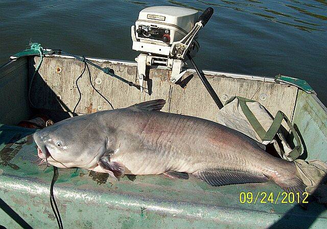 MY 25 3/4 pound  37 inch BLUECAT Sept. 24 th.2012!